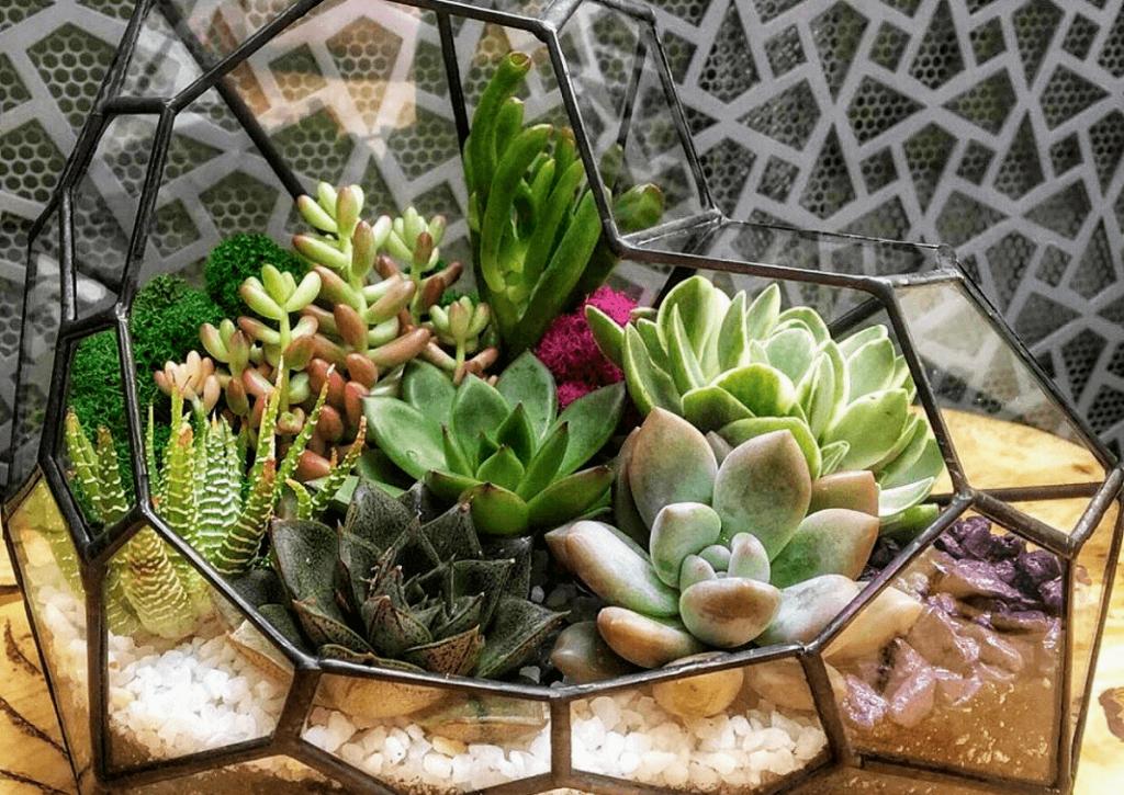 Идеи оформления флорариумов