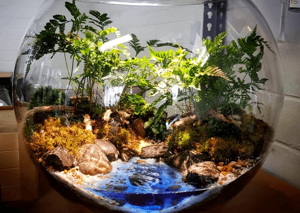Флорариумы: виды, описание, идеи оформления