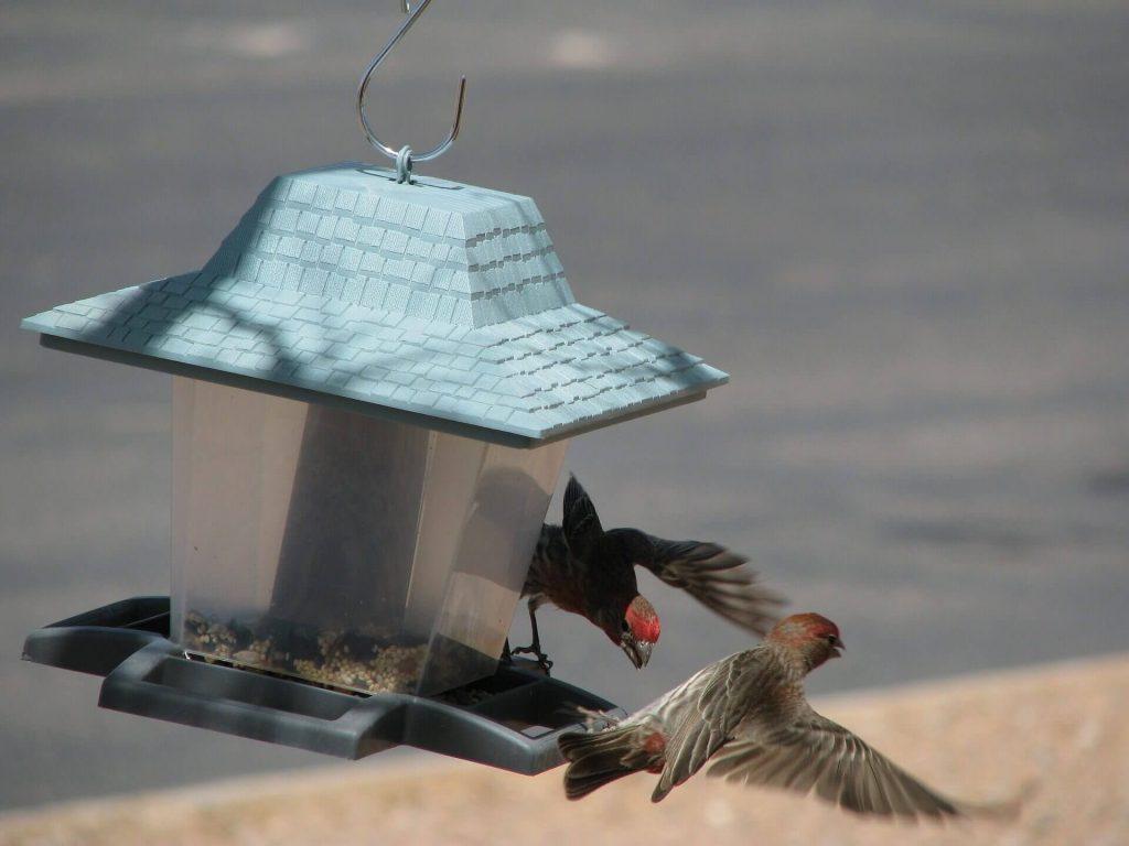 Пластиковая кормушка для птиц