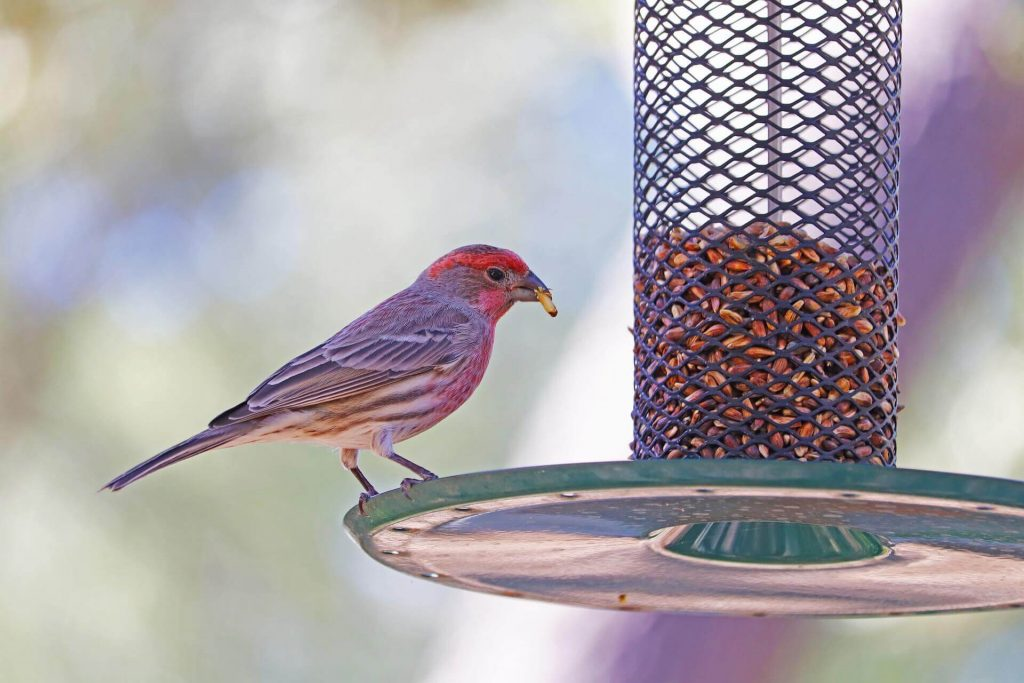 Кормушки для птиц в саду