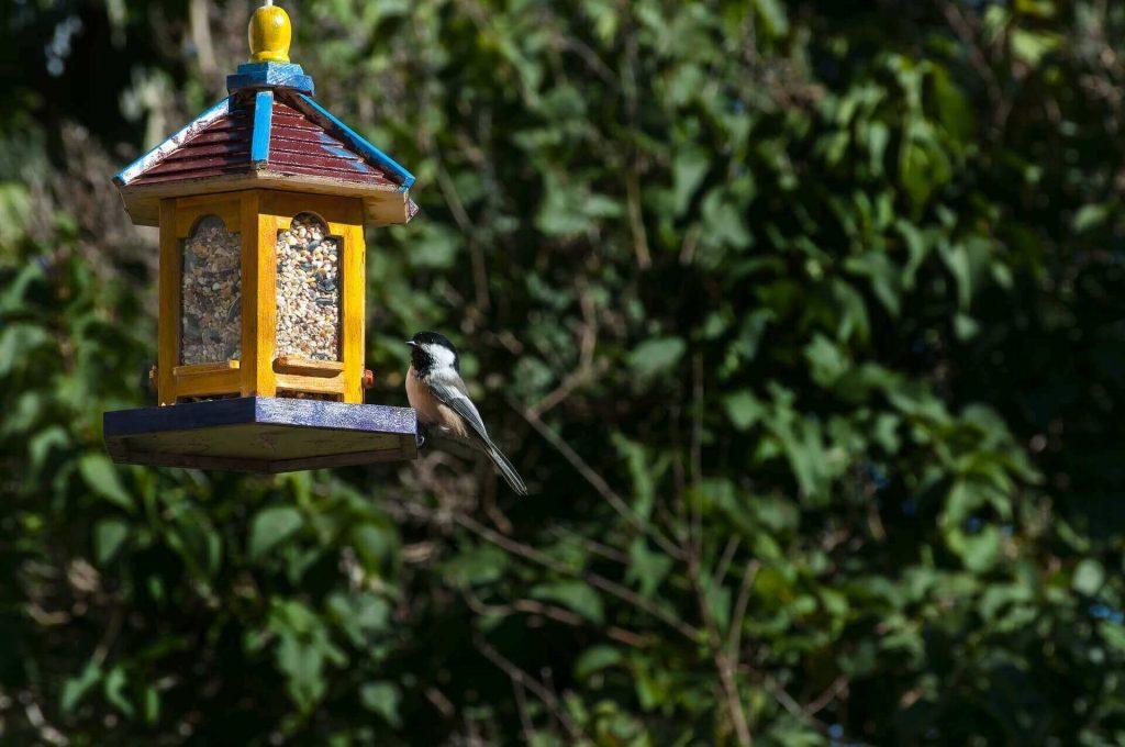 Закрытые кормушки для птиц