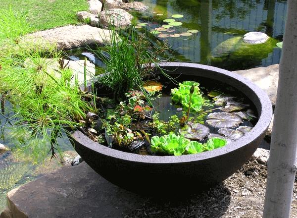 Садовые мини-водоемы в емкостях: фото