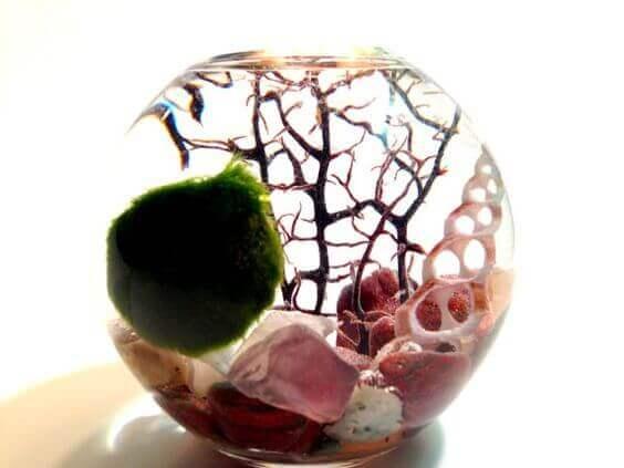 Миниатюрный аквариум как элемент декора
