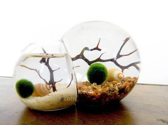 Дизайнерские пико-аквариумы