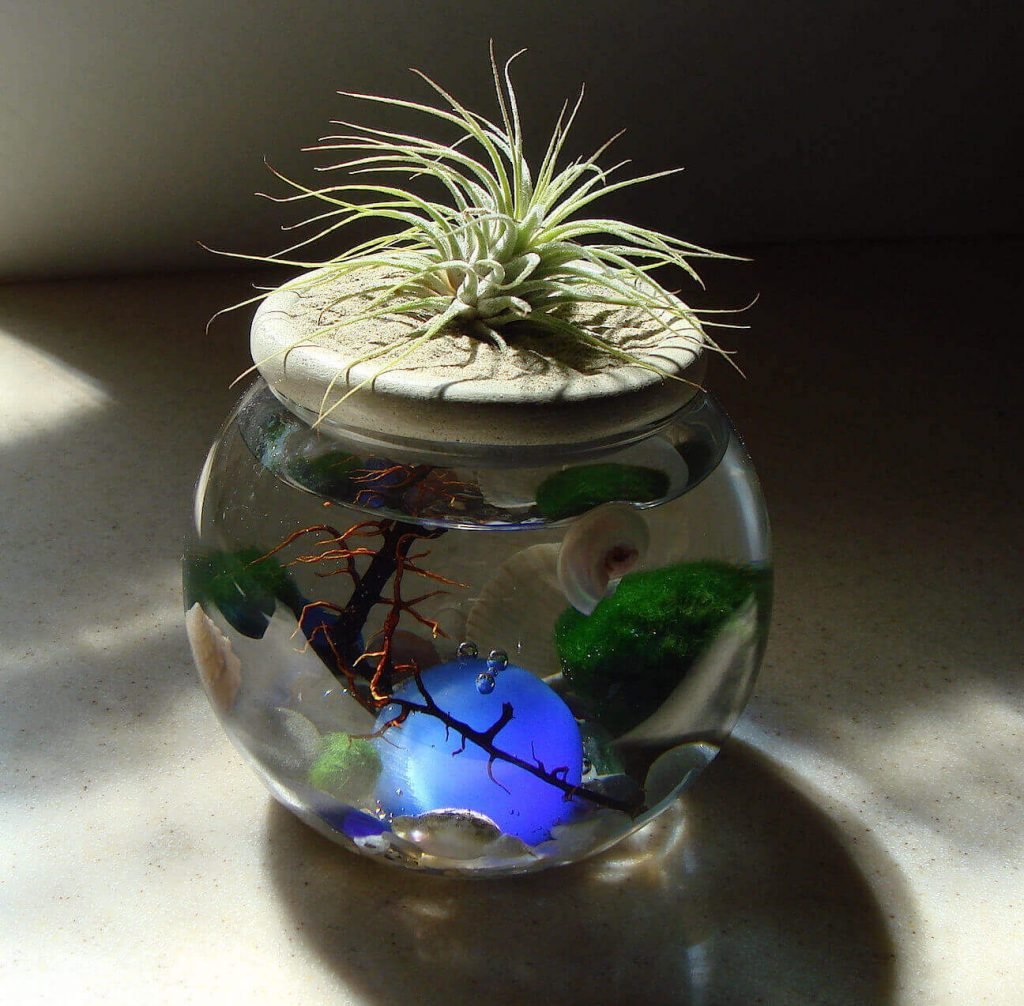 Сочетание мини-аквариумов с комнатными растениями