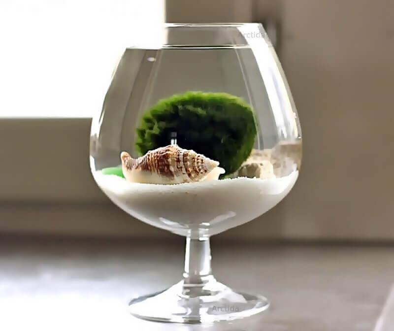 Мини-аквариумы в стеклянной кухонной посуде