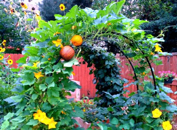 Опоры для огородных растений